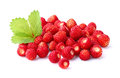 Wild Strawberry Royalty Free Stock Image - 44064806