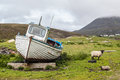 Stranded Boat On A Scottish Green Field With Sheep On The Side Stock Photo - 44093890