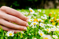 Female Hand Picking Flowers. Royalty Free Stock Photos - 44096878
