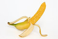 Corn Cob With Banana Skin Royalty Free Stock Image - 44107266