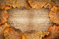 Dry Oak Leaves As Frame Royalty Free Stock Photo - 44116345