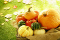Variety Of Pumpkins And Gourds In Wooden Crate Stock Photo - 44139640