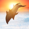 Group Of Jumping Dolphins Stock Photos - 44192363