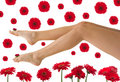 Pretty Legs Royalty Free Stock Photography - 4425097