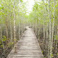 Wood Path Way Among The Mangrove Forest Stock Image - 44209371