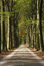 Forest Road Royalty Free Stock Photography - 44217757