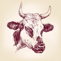 Cow Hand Drawn Vector Llustration Royalty Free Stock Photo - 44219565