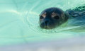 Sealpup Stock Images - 44228504