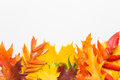 Autumn Leafs On White Background Royalty Free Stock Photography - 44255037