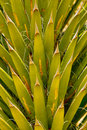Cactus Palm Leaves Royalty Free Stock Photos - 44264038