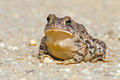 Toad Stock Images - 44279904