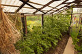 Greenhouse Stock Photography - 44282222
