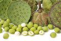 Lotus Seed Pods Royalty Free Stock Images - 44321539