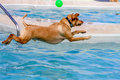 Dogs Swimming In Public Pool Royalty Free Stock Photos - 44333268