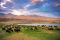 A Herd Of Sheep And Goats Grazing Near The Lake At The Foot Of T Royalty Free Stock Photo - 44350155