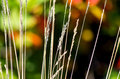 Dry Grass Stock Images - 44351884