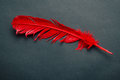 Red Feather Stock Photography - 44357982
