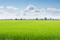 Green Field And Sky With White Clouds. Stock Photos - 44364573
