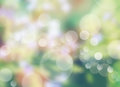 Natural Green Bright Blur Background Of Sunny Summer Forest Stock Image - 44385541