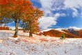 First Snow In The Forest In The Mountains. Sunny November Day Royalty Free Stock Photography - 44388017