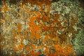 Grave Lichen Royalty Free Stock Image - 44391746