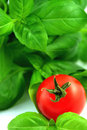 Fresh Basil And Tomato Royalty Free Stock Images - 4443009