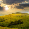 Pine Trees Near Valley In Mountains  On Hillside  At Sunset Stock Photography - 44427802