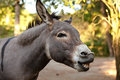 Donkey Stock Photography - 44467222