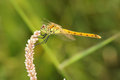 Dragonfly Royalty Free Stock Image - 44480156