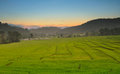 Green Terraced Rice Field Royalty Free Stock Image - 44492696