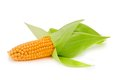 Corn Ear Isolated Stock Images - 44498154
