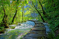 Forest Path Royalty Free Stock Photography - 44500557