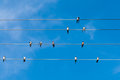 Swallows On Wires Under A Blue Sky Stock Photo - 44500990