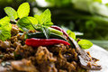 Spicy Minced Pork Salad Royalty Free Stock Image - 44542836