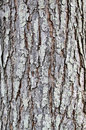 The Tree Bark Is Dry Royalty Free Stock Photo - 44595595