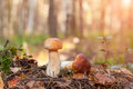 Two Cep Mushrooms In The Moss. Autumn Forest Royalty Free Stock Images - 44661209