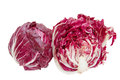 Red Chicory Royalty Free Stock Photos - 44683148