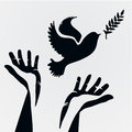 Dove With Olive Branch Stock Photo - 44685260