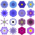 Collection Various Blue Concentric Flowers Isolated On White Royalty Free Stock Photos - 44696098