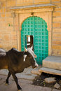 Indian Sacred Cow Stock Photography - 4470702