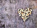 Heart From Beans Royalty Free Stock Images - 44732469