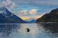 Whale Tail In The Still Waters Of Alaska Stock Photography - 44755422
