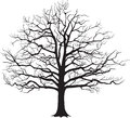 Black Silhouette Bare Tree . Vector Illustration Royalty Free Stock Photo - 44762495