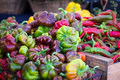 Colorful Peppers Royalty Free Stock Image - 44774766