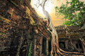 Ta Prohm Temple With Giant Banyan Tree At Sunset. Angkor Wat, Cambodia Royalty Free Stock Photo - 44797145