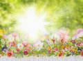 Summer Flowers Bed On White Terrace On Background Royalty Free Stock Image - 44877646