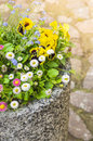 Colored Flower Bed In Big Pot Stock Images - 44879484