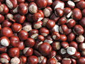 Chestnuts Royalty Free Stock Image - 44887826