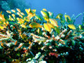 Tropical Coral Reef Fish Stock Photography - 4495592