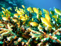 Tropical Coral Reef Fish Stock Photo - 4495680